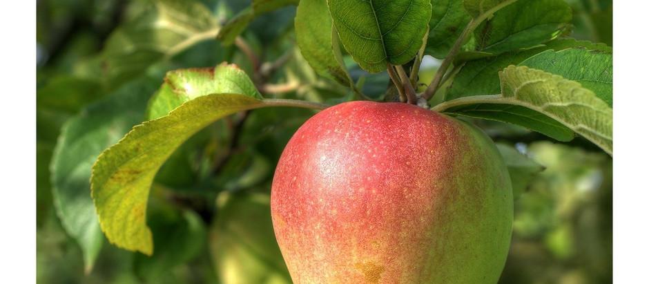 Faithful Fruit