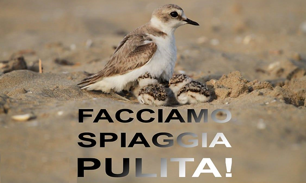 Evento Facciamo spiaggia pulita Lido di Venezia