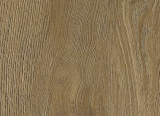 Distinctive: Tanoak