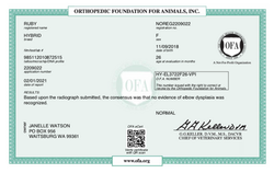 Ruby's OFA Elbows Certificate