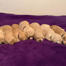 All 7 Puppies