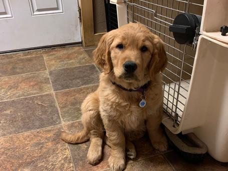 cute sansa as a puppy.jpeg