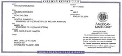 Watson's Maverick AKC Registration