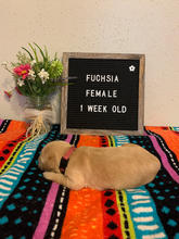 Fuchsia Pink Girl 1 Week Old
