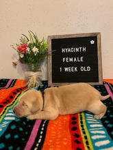 Hyacinth Girl 1 Week Old.jpeg