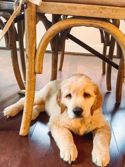 Cody at 9 weeks old