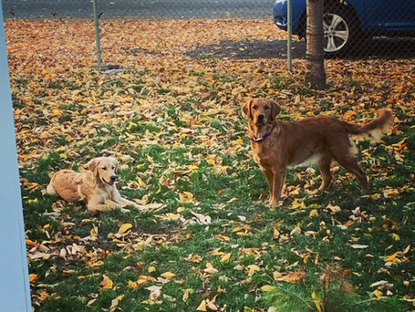 Liberty and Sansa in the fall leaves 2021.jpeg