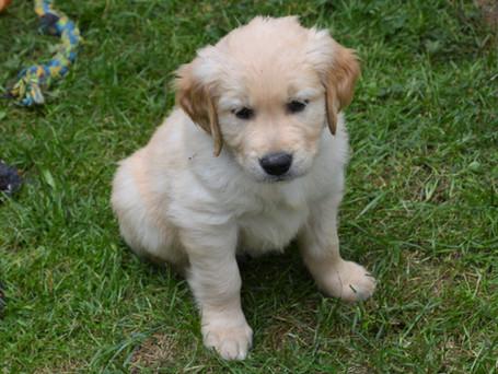 Liberty Small Puppy.jpeg