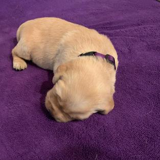 Violet Purple Girl
