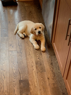 Poppy at 9 weeks old
