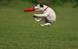 Dogs Love a Challenge.jpg