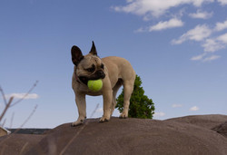 Dogs Love the Climb the BIG ROCK