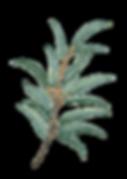 watercolor_leaf5.png