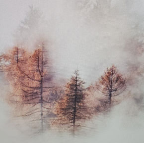 Misty Forrest example