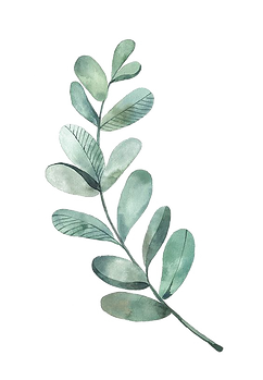 watercolor_leaf7.png