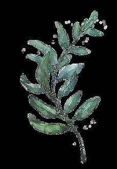 watercolor_leaf2.png