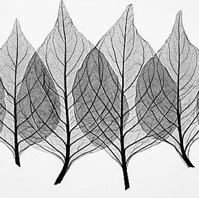 x-ray leaves example