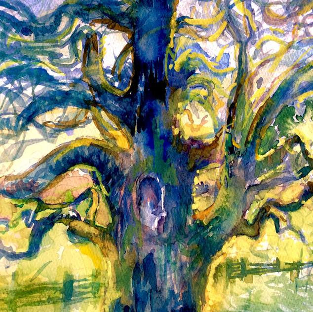 Jeanne's Valley Oak