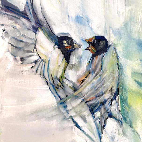 Barn Swallows Feeding Young Midair.jpg