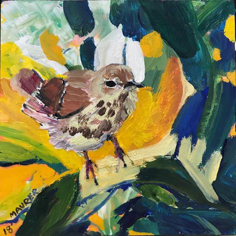 Oven Bird