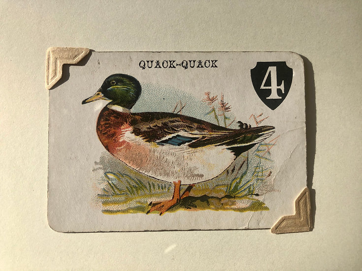 Mallard Drake Duck Victorian Greetings Card