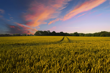 East Anglia Landscape