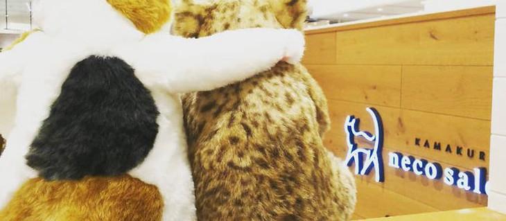 8月8日(日)12時~・20時~ ショップチャンネル放映決定!