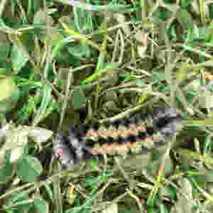caterpillar speed distance time problem