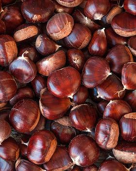 Ripe chestnuts close up. Raw Chestnuts f