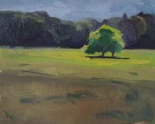 Little tree in a Warwickshire field