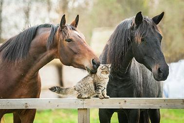 communication animale et soins aux animaux