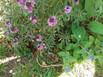 EMILY 22-4 FLOWERS IN THE GARDEN.jpg
