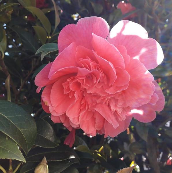 WENDY 22-4 CLOSE UP FLOWER.jpg