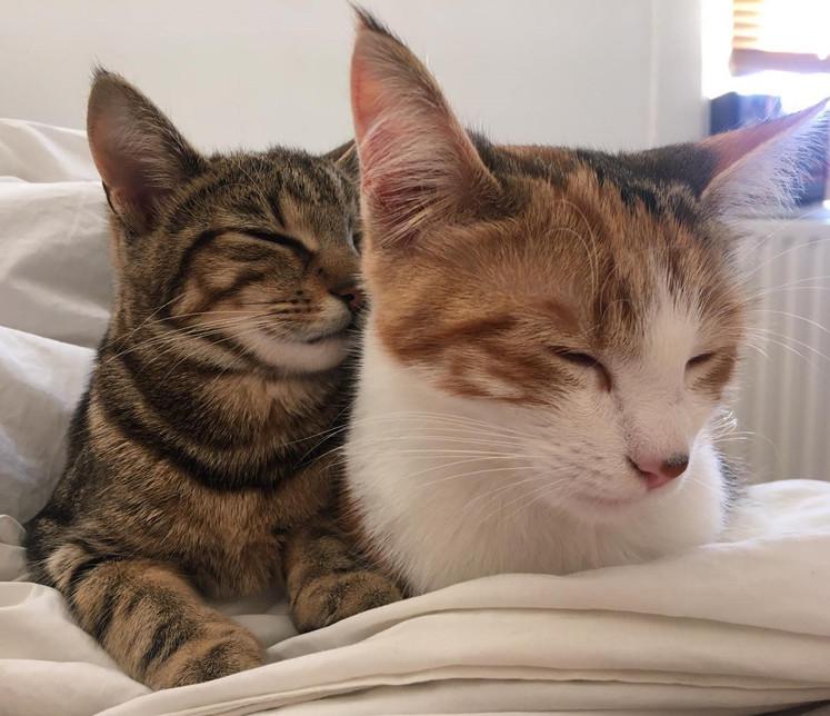 SARAH 7-4 MY CATS.jpg