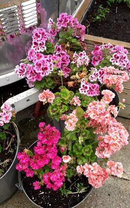 ELIZA - ON MY WALK - BEAUTIFUL FLOWERS.j