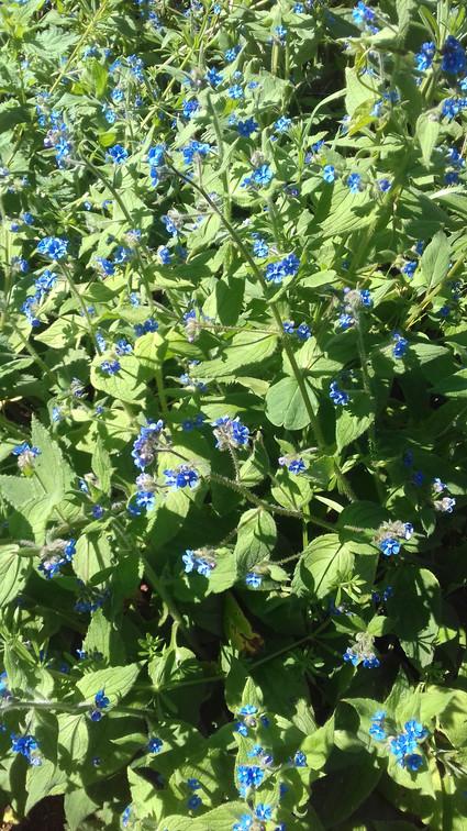 EDDIE 23-4 FLOWERS.jpg