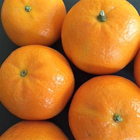 Oranges by Ben
