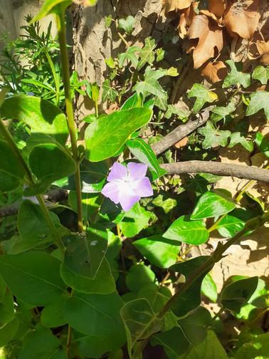 ELIZA 22-4 FLOWERS IN THE GARDEN.jpg