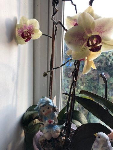 MAGGIE 22-4 ORCHIDS AND FARIES.JPG