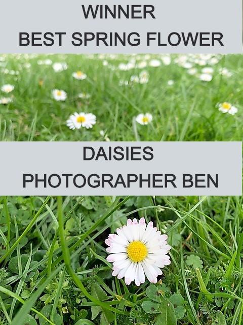 BEN%20DAISIES_edited.jpg