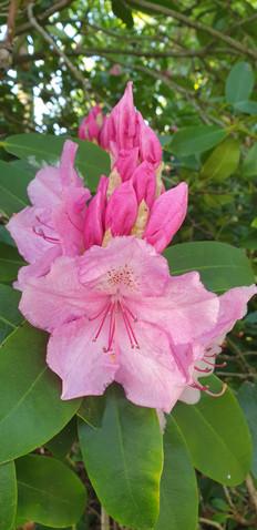 CHRIS 21-4 CLOSE UP FLOWER WOODLAND GARD