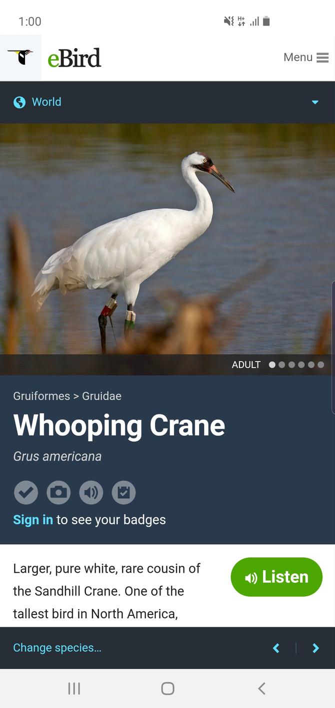 #crane