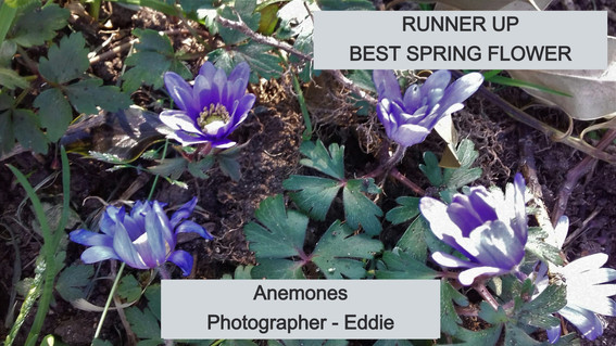 EDDIE%252025-3%2520ANENOME_edited_edited