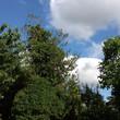 MIKE 18-6 BLUE SKY AFTER THE RAIN.jpg