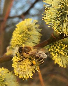 Přírodní medovina