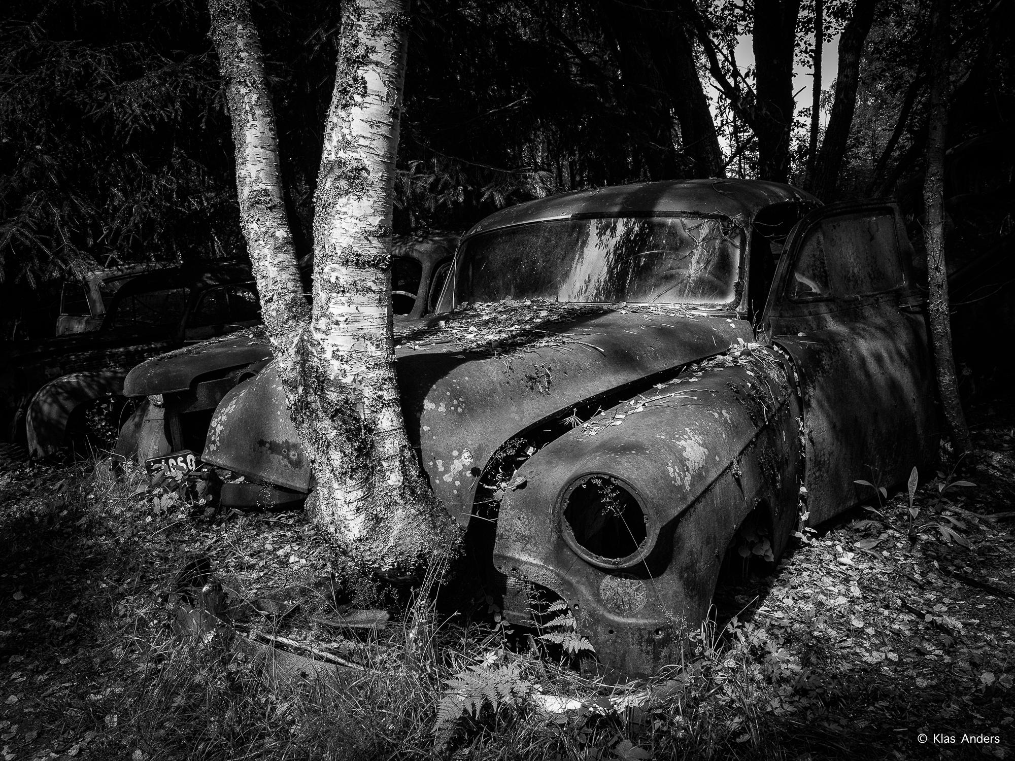 Woodland #6