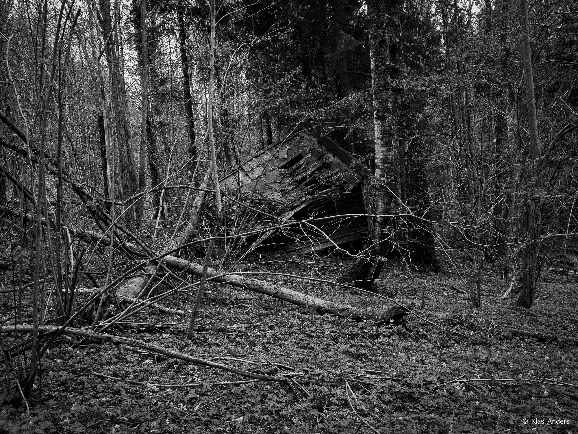 Woodland #9