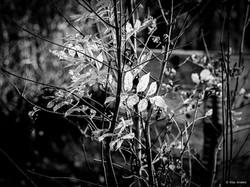 Woodland #12