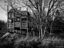 Woodland #10