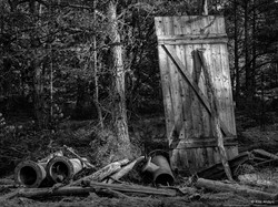 Woodland #11